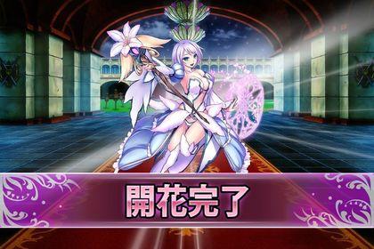 161112リューココリーネ(開花).jpg