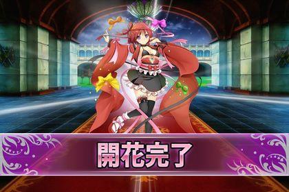161122チョコレートコスモス(開花).jpg
