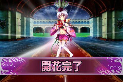 170104サオトメバナ(開花).jpg
