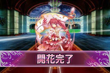180910パキラ(開花).jpg