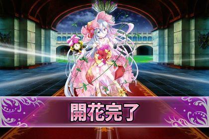 170214オシロイバナ(開花).jpg